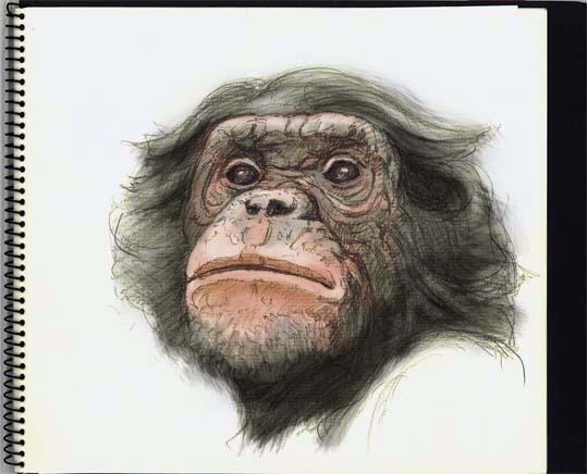 ボノボの画像 p1_14